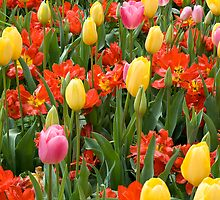 Tiptoe Through The Tulips by Sue Martin