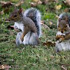 Squirrel Pals by Andy Smith
