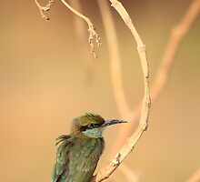 Little Green Bee-Eater 1 by David Clark