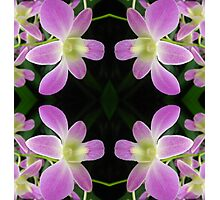 Purple Orchid Abstract Photographic Print