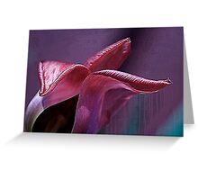 Silky fading tulip.... Greeting Card