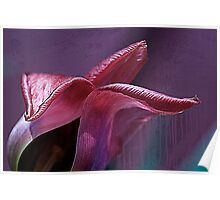 Silky fading tulip.... Poster