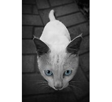 Curious One Photographic Print