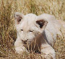 White Lion Cub by laureenr