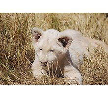 White Lion Cub Photographic Print