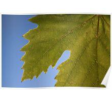 Wine Leaf Canada Poster