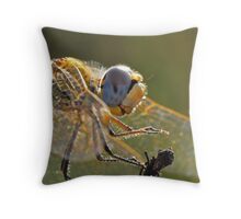 Macrophoto of a Dragonfly - France (Corsica island) Throw Pillow