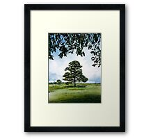 New Forest Tree Framed Print