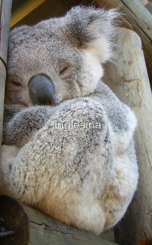 Quiet I'm Sleeping! by inglesina