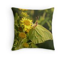 Brimstone On Common Fleabane Throw Pillow