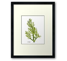 Dill Painting Framed Print