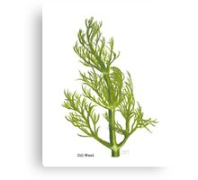 Dill Painting Canvas Print
