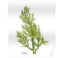 Dill Painting Poster