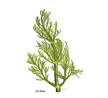 Dill Painting Photographic Print