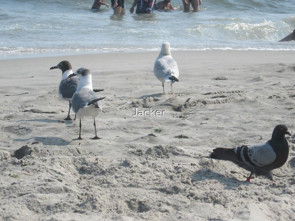 Birds on the beach! by Jacker