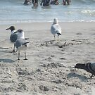 Birds on the beach! by Jacker