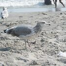 seagull on the beach by Jacker