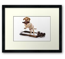 Brown retriever puppy jumping Framed Print