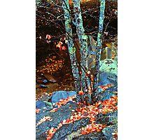 MAPLE TREE,LATE AUTUMN Photographic Print