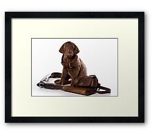 brown puppy retriever Framed Print
