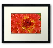 Dahlia in water color Framed Print
