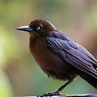Mexican Bird by Robin Webster