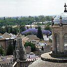 Sevilla by Debbie Vine
