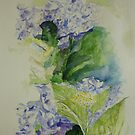 Blue Hydrangeas by lizzyforrester