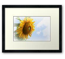 Sunflower in bloom Framed Print