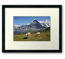 The Eiger and cows!! Framed Print
