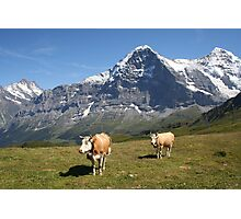 The Eiger and cows!! Photographic Print