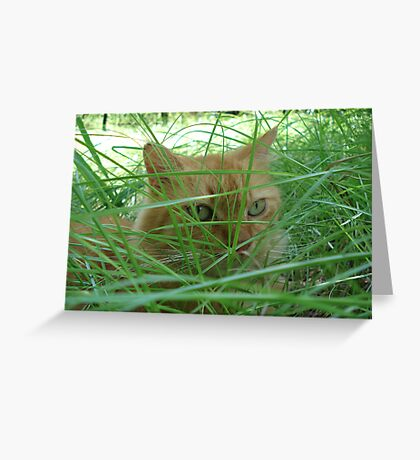 Tiger in the Tall Grass Greeting Card