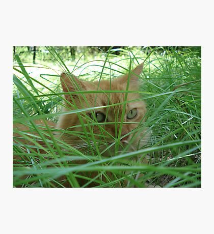 Tiger in the Tall Grass Photographic Print