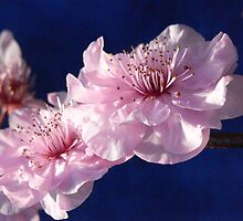 blossom I by Floralynne