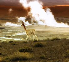 A Lama in a Geysers area by TheSpaniard