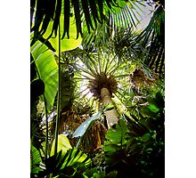 tropical canopy ... Photographic Print