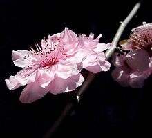 blossom II by Floralynne