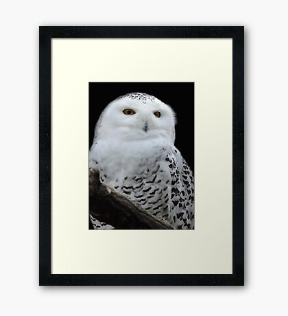 The White Hunter Framed Print