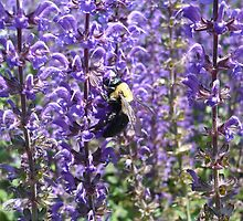 Bumble bee by purplebfly