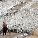 Wave of Sheep, Red Desert, Wyoming by A.M. Ruttle
