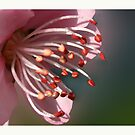 Flowers Close Up by Aerhona