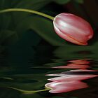 Tulip Reflections by Elaine Teague