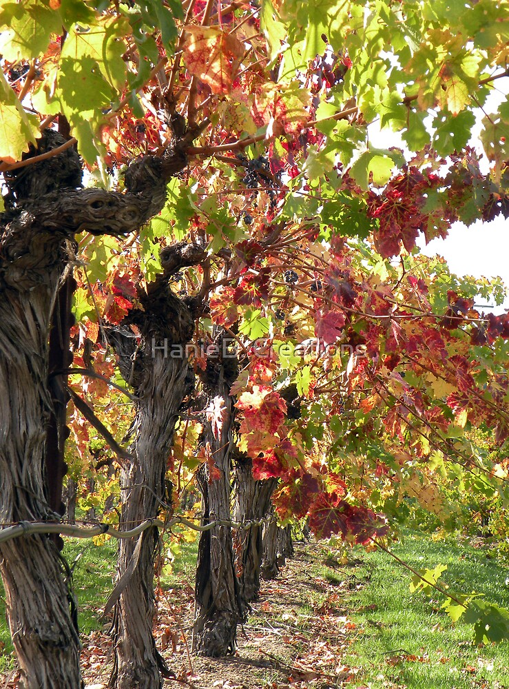 Vineyards of Calistoga  by HanieBCreations