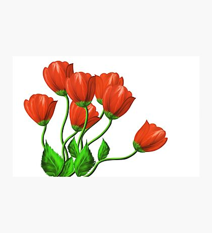 Red flowers on a white background Photographic Print