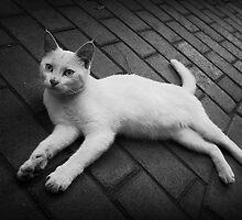 Lazy Cat by Douglas M. Paine