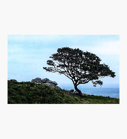 Boughing To Nature Photographic Print