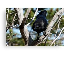 Crow Prepared to Leap Canvas Print