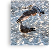 Above and Below... Canvas Print