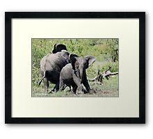 O NO, THIS IS MY SPACE! THE AFRICAN ELEPHANT – Loxodonta Africana - AFRIKA OLIFANT Framed Print