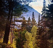 Alpine Loop Pine Trees by Ryan Houston